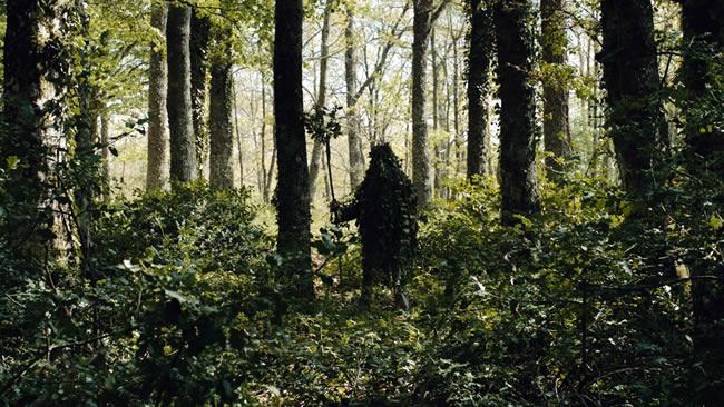 michelangelo_frammartino_alberi