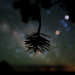 SHonda-pinyon-scorpius1024